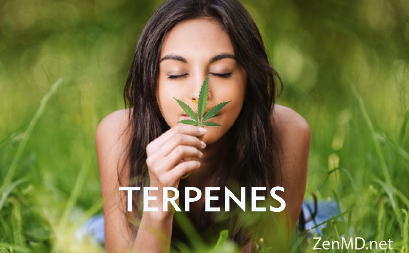 The benefits of Cannabis Terpenes