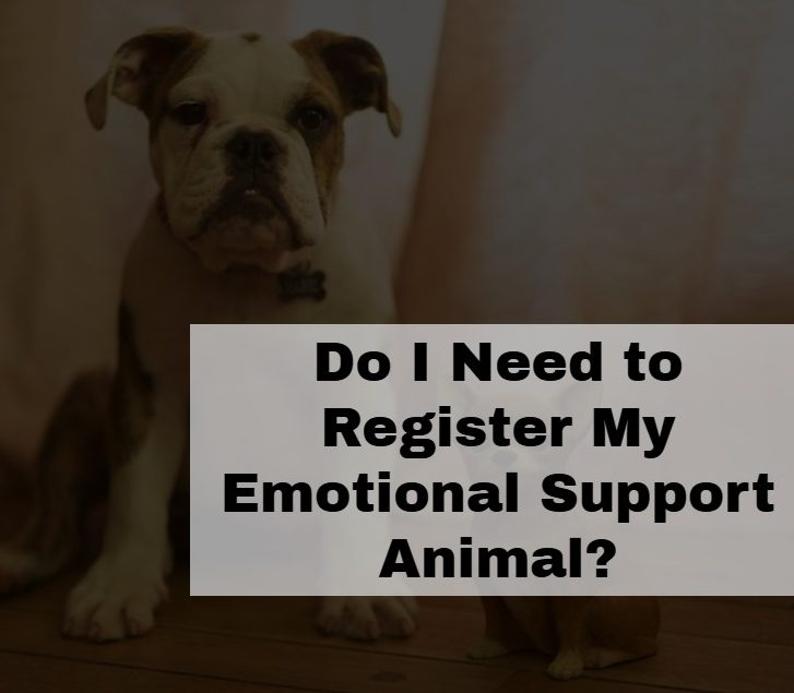 Do I Need to Register My Emotional Support Animal